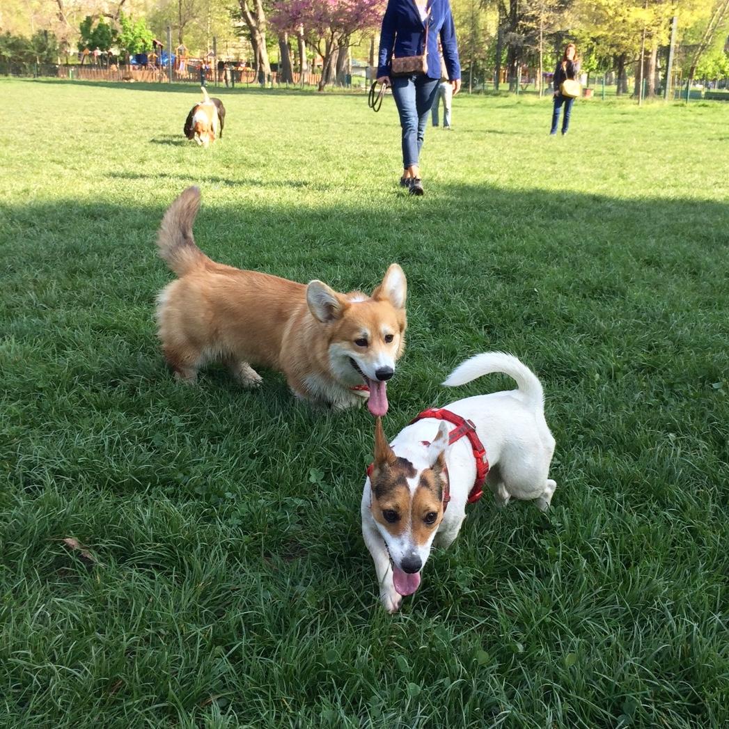 Bruno al Parco